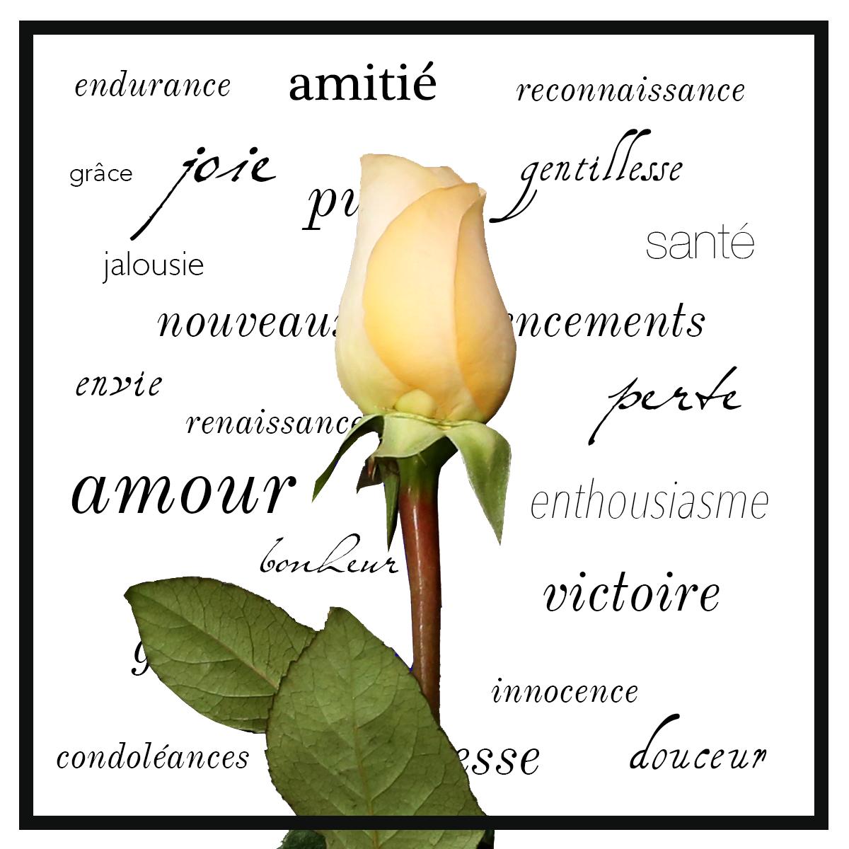 Comment choisir un bouquet avec sens