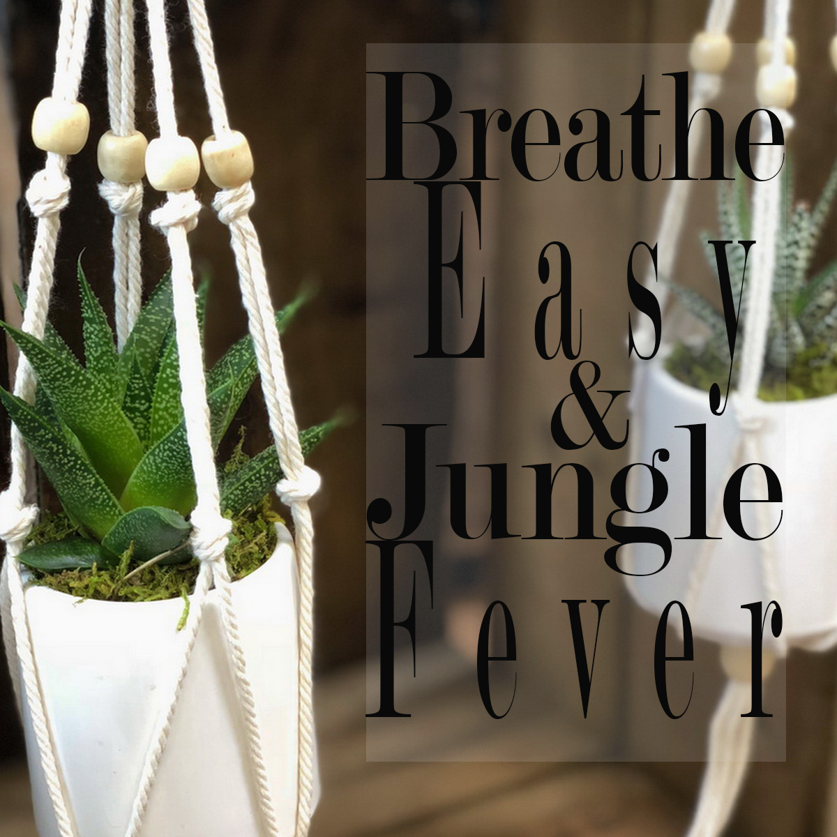 Breathe Easy and Jungle Fever Article