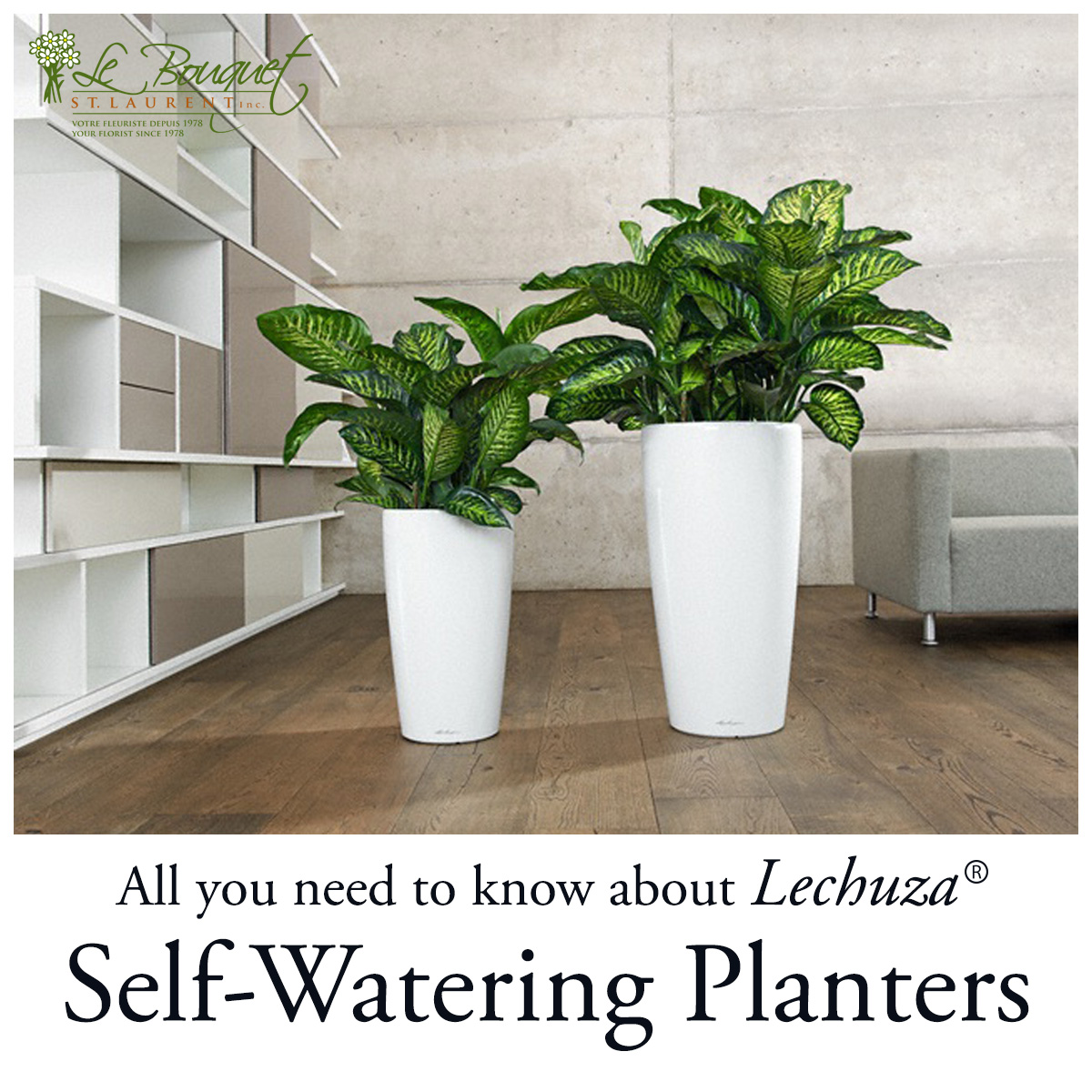 All you need to know about self-watering planters by Le Bouquet St Laurent and Lechuza