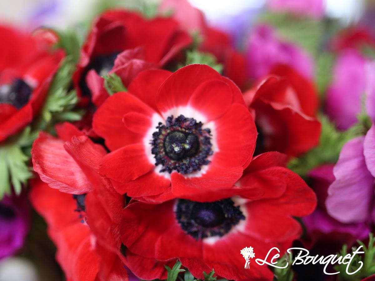 anemonie flowers at le bouquet st laurent