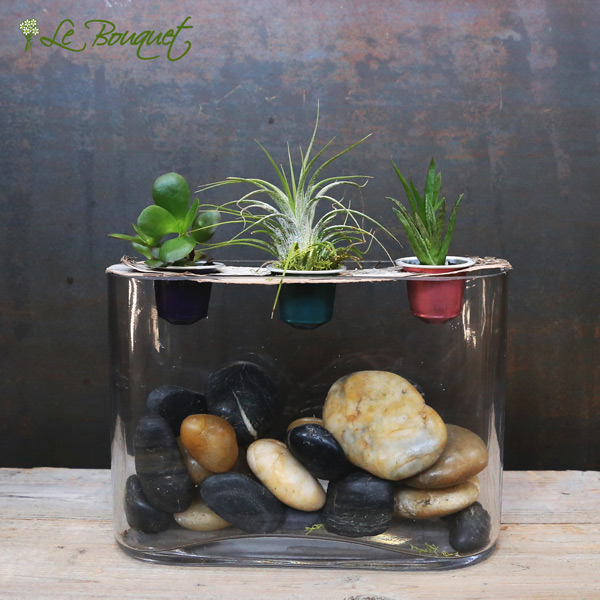 Upcycling nespresso pods for air plants and succulents by Le Bouquet