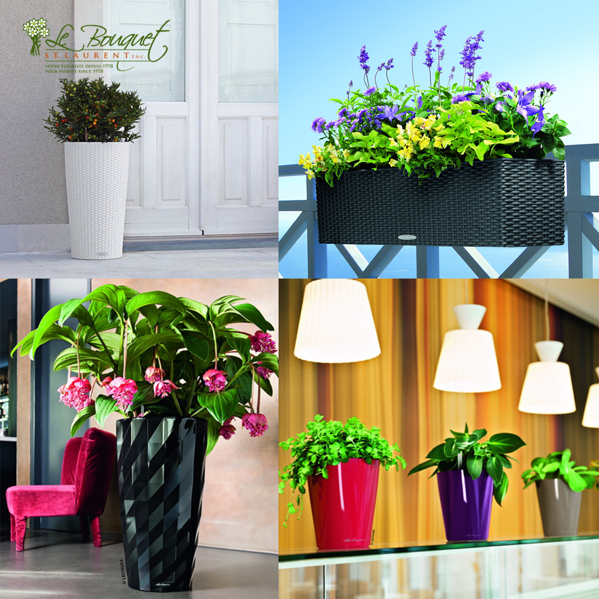 Lechuza brand self-watering pots sold by Montreal florist Le Bouquet St Laurent