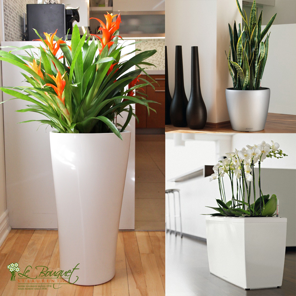 Lechuza brand self-watering pots sold by Montreal florist Le Bouquet St Laurent