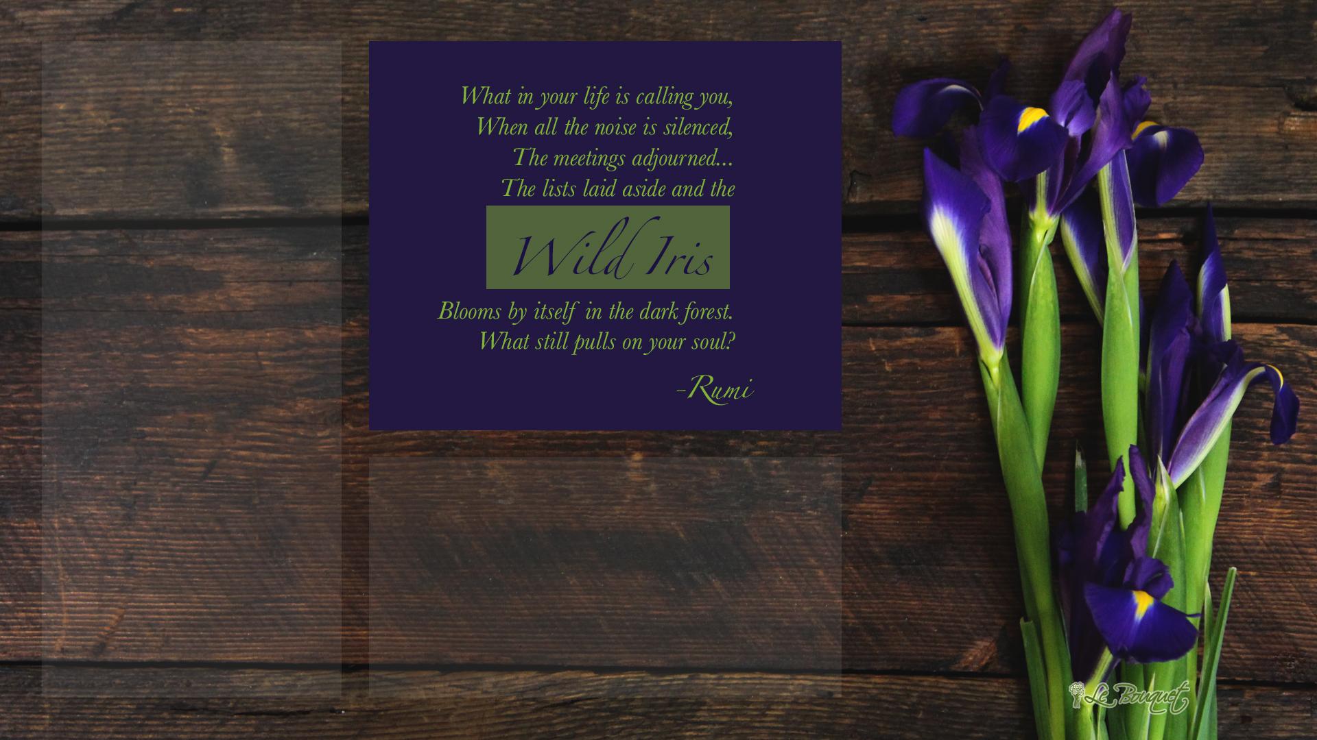 Wild iris desktop wallpaper - fond d'écran gratuit par Le Bouquet